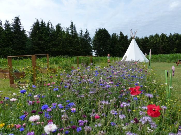 Le Labyrinthe de Pont-aven et sa ferme parc de loisirs nature finistère aménagement jachère fleurie le potager pédagogique