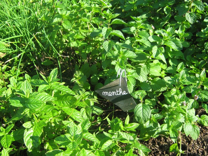Le Labyrinthe de Pont-aven et sa ferme parc de loisirs nature finistere le potager les plantes aromatiques : la menthe