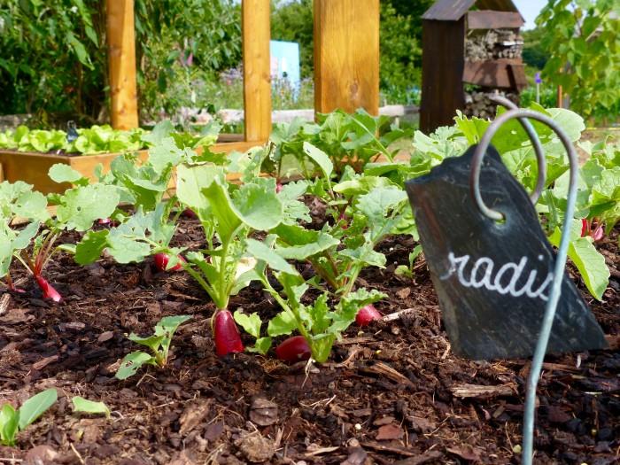 Le Labyrinthe de Pont-aven et sa ferme parc de loisirs nature finistere le potager les radis le potager pédagogique