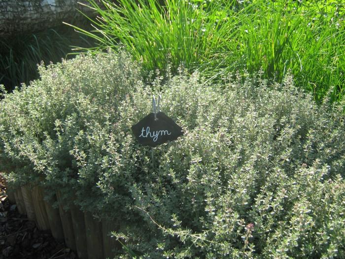 Le Labyrinthe de Pont-aven et sa ferme parc de loisirs nature finistere le potager les plantes aromatiques : le thym le potager pédagogique
