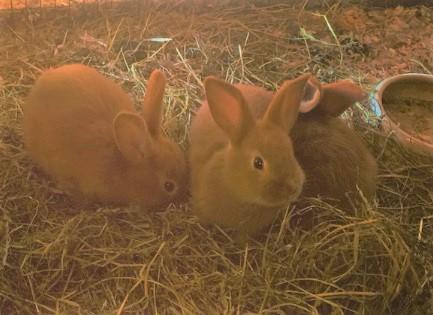 Les bébés lapins ont grandi