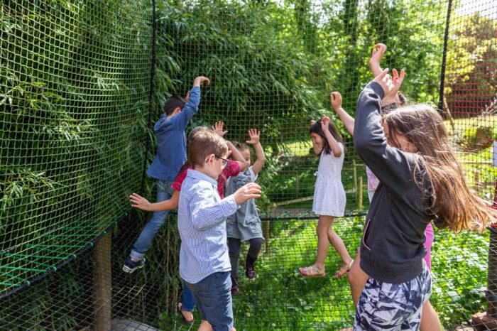 labyrinthe de bois loisirs enfants les jeux